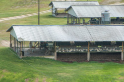 Breeder-Farms3